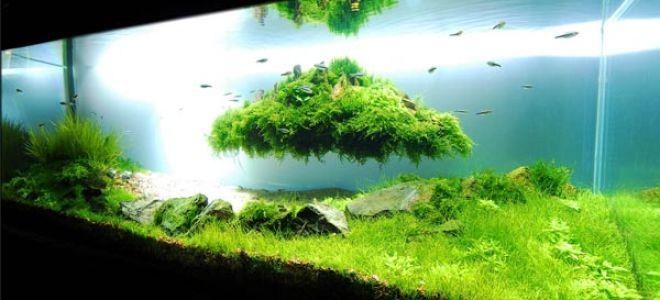 Как с помощью аквариумных растений вдохнуть в аквариум жизнь