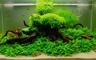 Нужно ли знать объем аквариума?