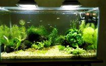 100 литров аквариум: насколько он велик?