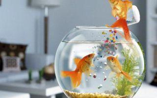 Аквариумные рыбки: в здоровом теле – здоровый дух