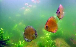 Вода в аквариуме позеленела: о чем это говорит?