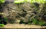 Оформить заднюю стенку аквариума: следование модным тенденциям или забота об обитателях аквариума?