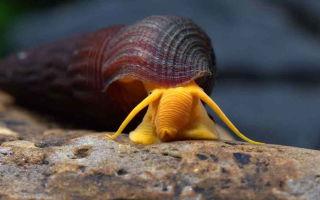 Виды аквариумных улиток: чем они похожи и в чем основные различия?