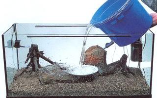 Отстаивание воды в аквариум: насколько это эффективный метод?