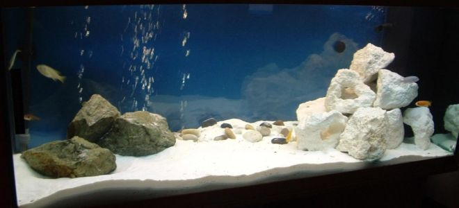 Песок в аквариуме: каприз или обоснованный выбор?