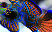 Если рыбки чешутся, что бы это могло быть?