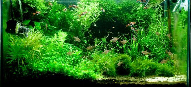 Вода в аквариум: как не ошибиться с её подбором?
