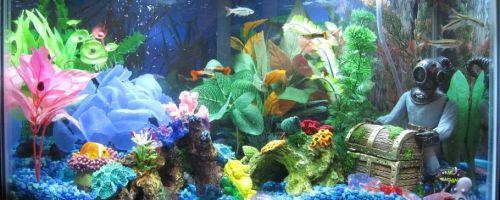 Совместное содержание — с какими рыбками уживаются гуппи