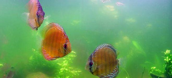 Что делать, если муть в аквариуме испортила весь пейзаж?