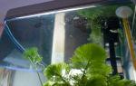 Пленка на поверхности воды: вредно ли это для обитателей аквариума?