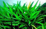 Криптокорины: способны украсить подводный мир только своими силами