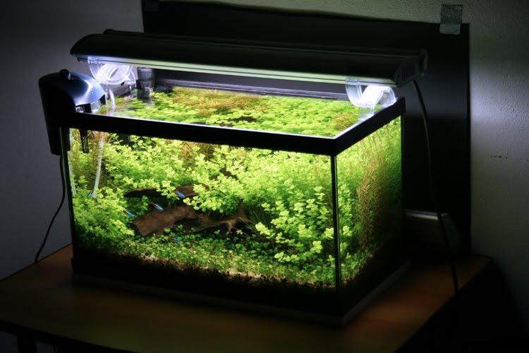 аквариум с неонами