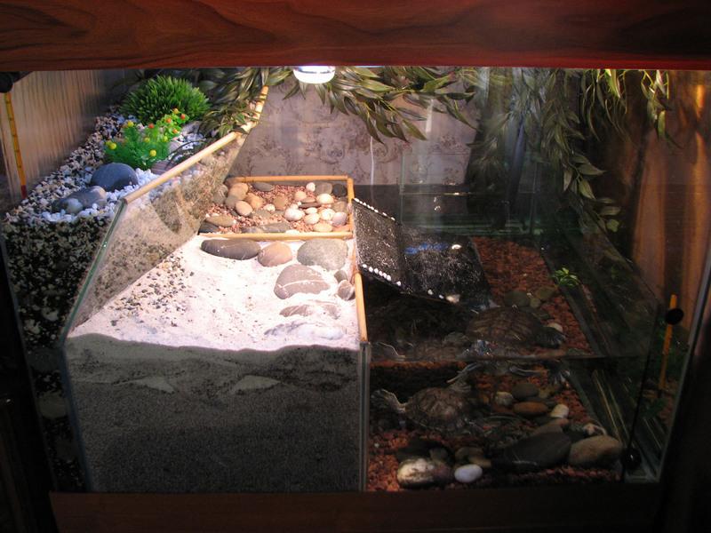 Мускусная черепаха террариум