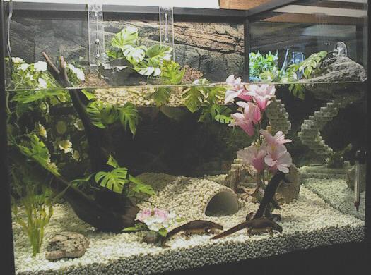 аквариум для тритона