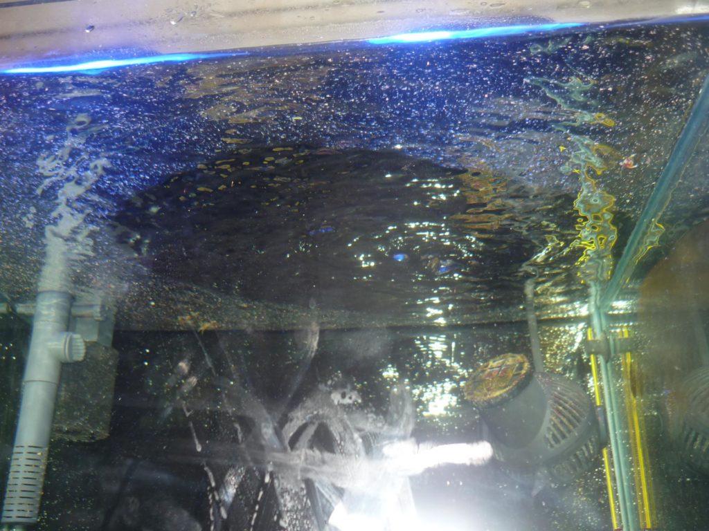 Пленка на воде в аквариуме , как убрать быстро