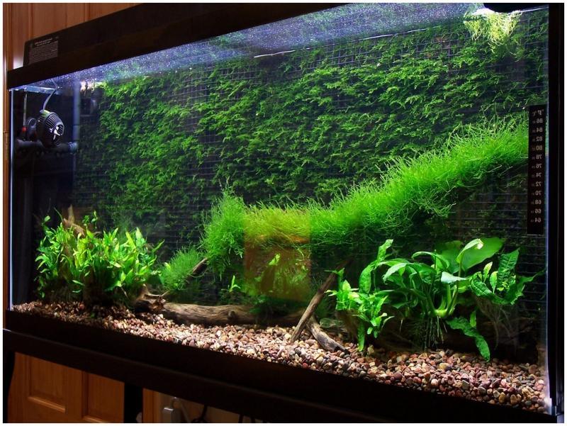 Задний фон аквариума из мха