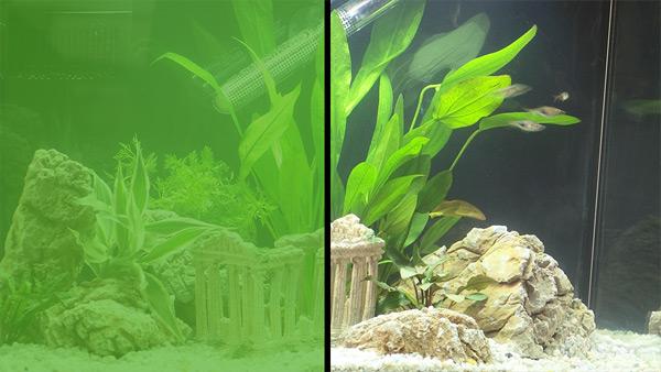 Зацвела вода в аквариуме как почистить