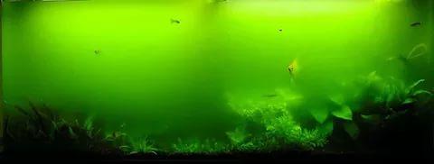 Зацвела вода в аквариуме