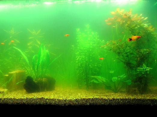 плохая вода в аквариуме
