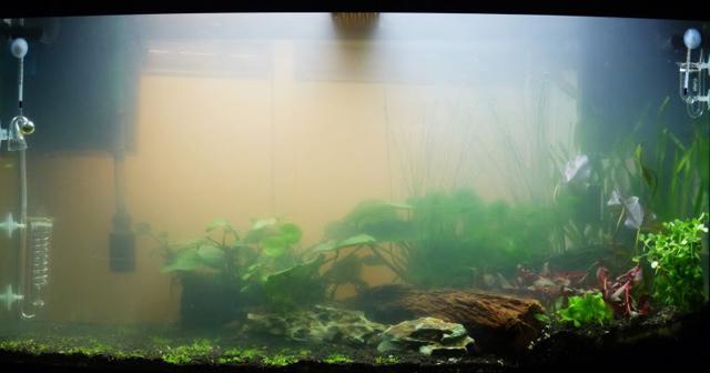 почему мутная вода в аквариуме