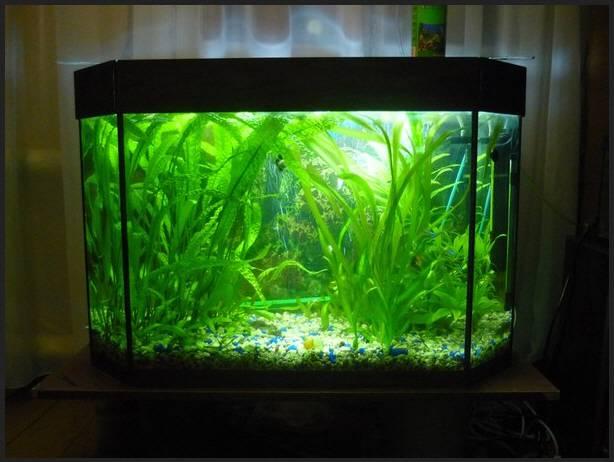 Растения для аквариума 100 литров