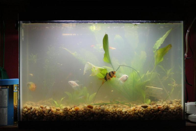 мутнеет вода в аквариуме что делать