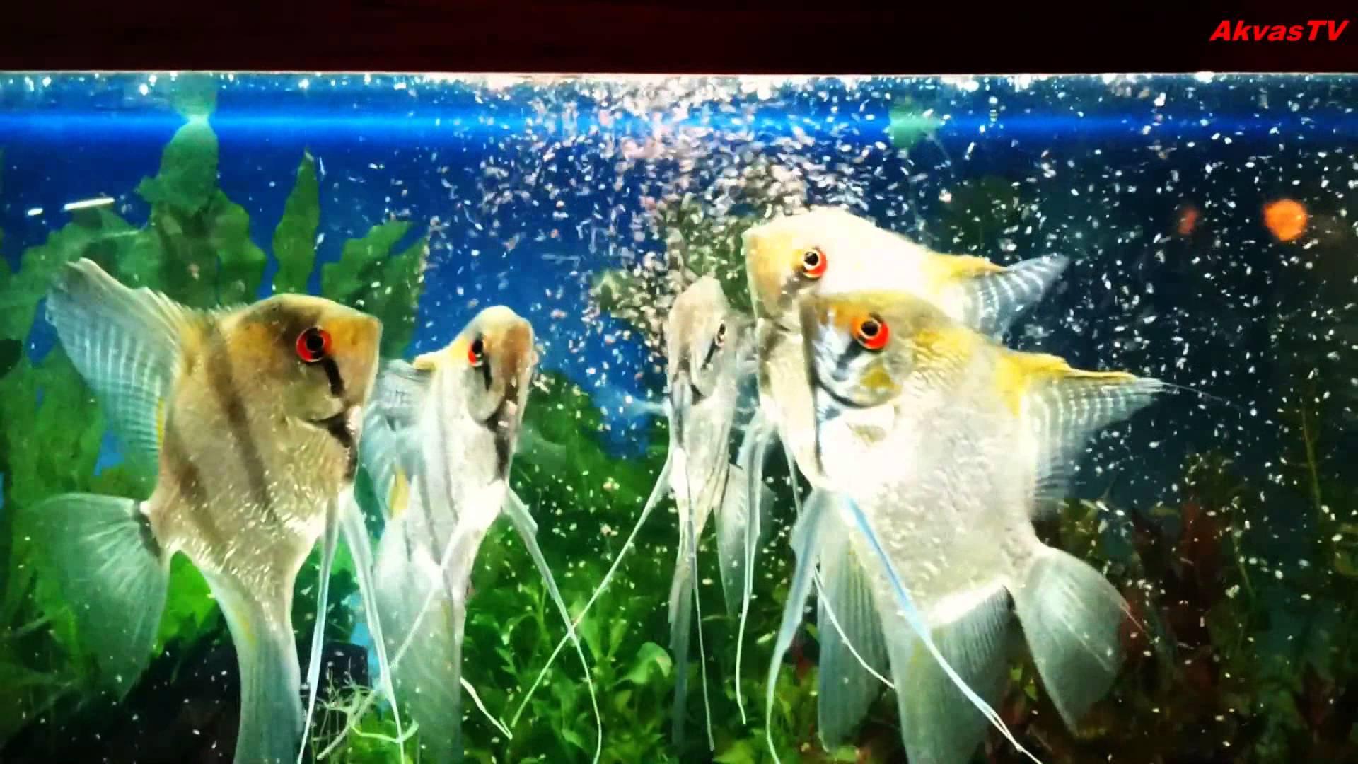 кормление аквариумных рыб. кормление рыбок