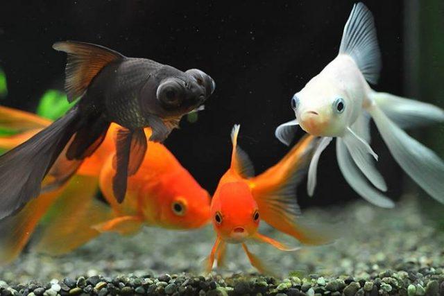 почему рыбки чешутся
