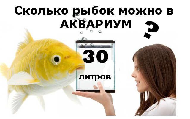 Сколько можно рыбок в аквариум 30 литров?